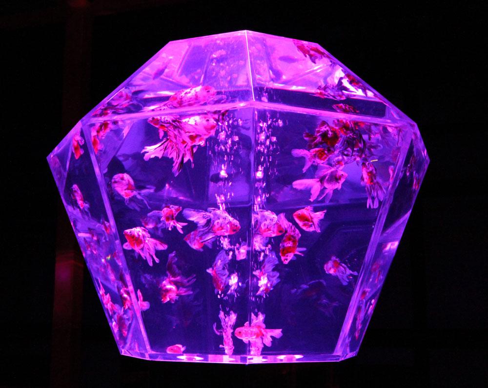 透き通る水の中で金魚が優雅に泳ぎます。次々と変わる光も幻想的。