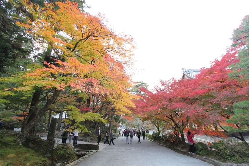 多くの人が紅葉を見ようと南禅寺を訪れていました。