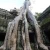 タ・プロームは巨木が遺跡を締め上げる圧巻の光景