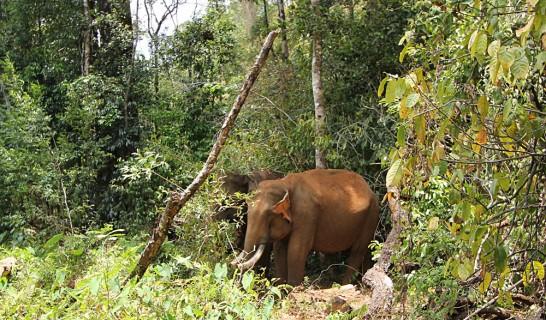 モンドルキリの象
