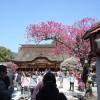 青空と紅白梅のコントラストが最高!3月の太宰府天満宮が最高
