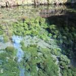 めちゃくちゃきれいな水に水草がとても映えます。
