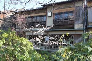桜と背景の家が本当に美しい。