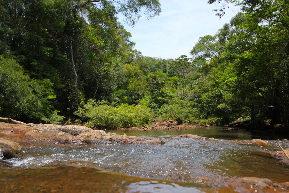 モンドルキリのジャングル
