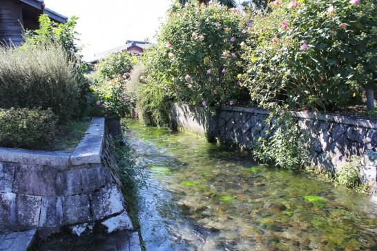 豊かなわき水が流れる滋賀・針江。