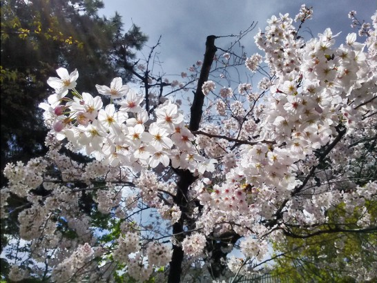 めちゃくちゃ咲きまくってました。
