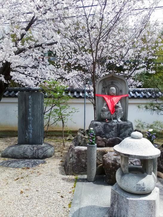 きれいな桜が咲いてました。