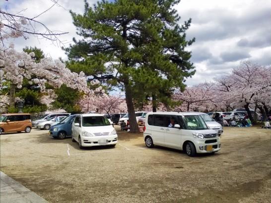 境内の駐車上には花見客でいっぱい