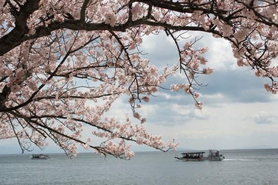 桜と花見船