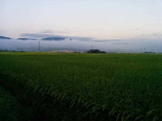 田上(たなかみ)の田園風景