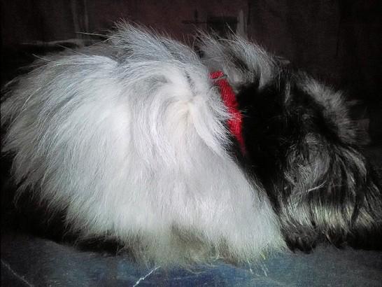 寒い時にはこたつの中で寝る犬