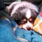 ケージの外でも寝るようになった
