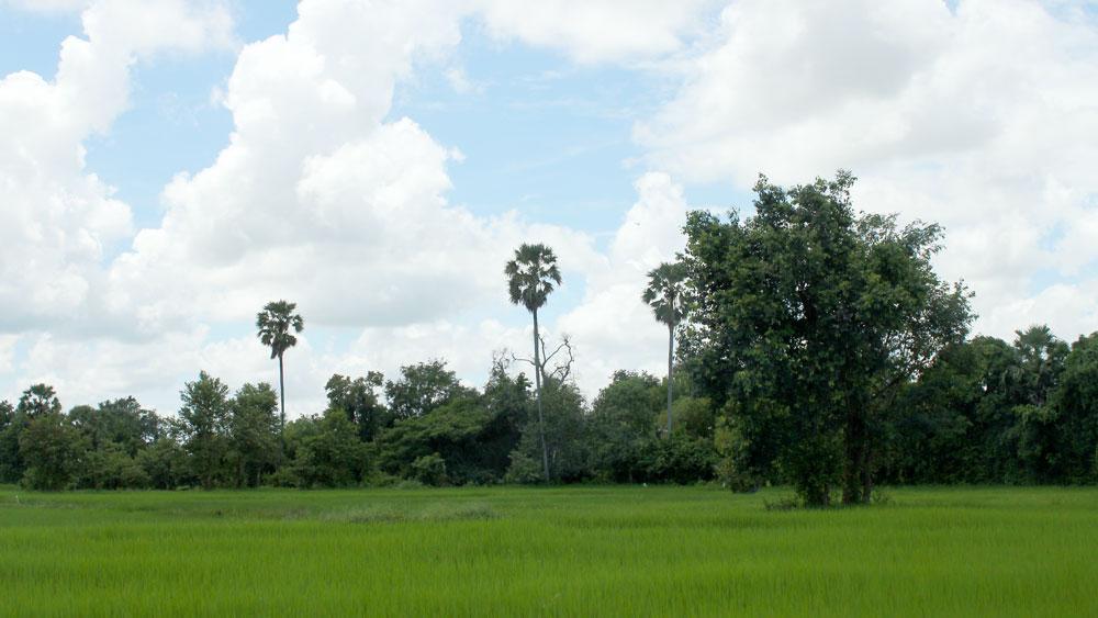 カンボジアの田舎の景色