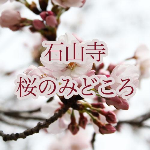 石山寺 桜のみどころ