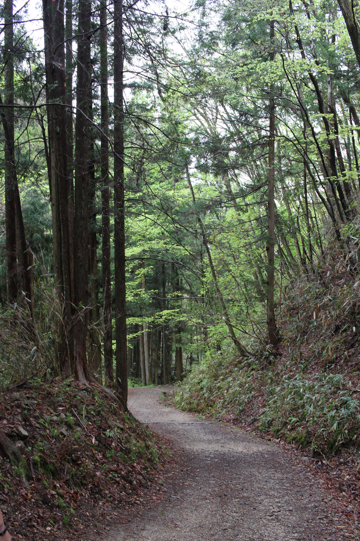 馬篭峠から妻籠宿への山道