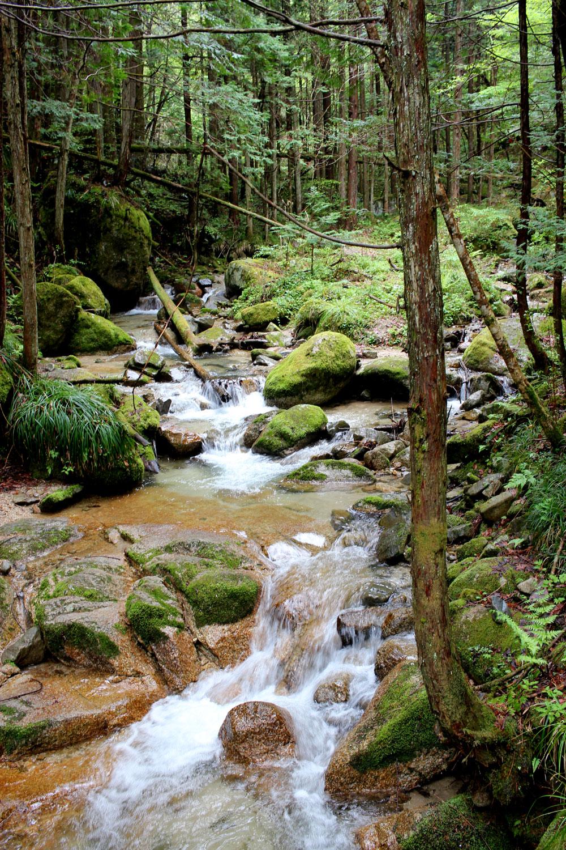 山を流れる小川
