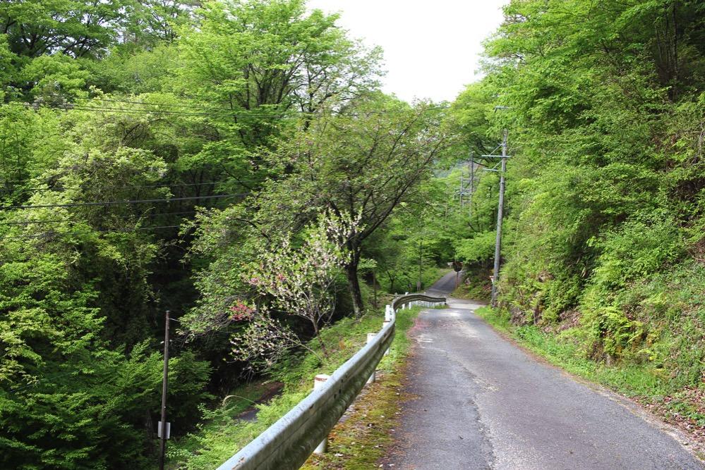 南木曽の山道