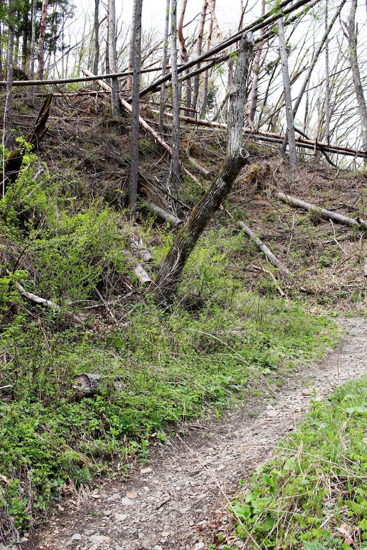 鳥居峠の急な坂道