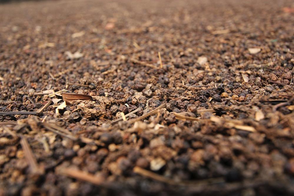 乾燥が進んだ胡椒