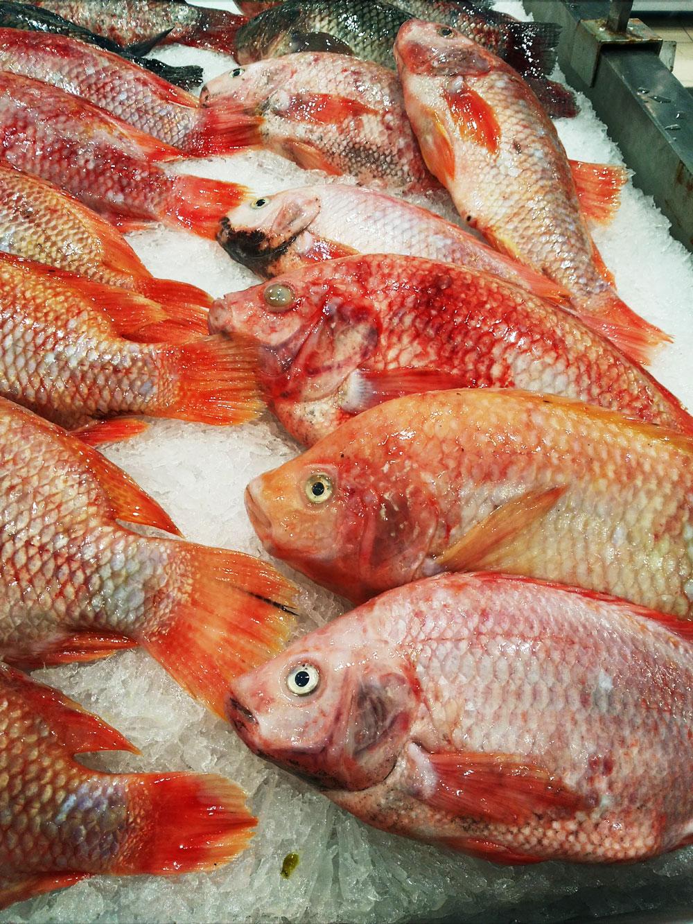 店頭に並ぶ魚たち
