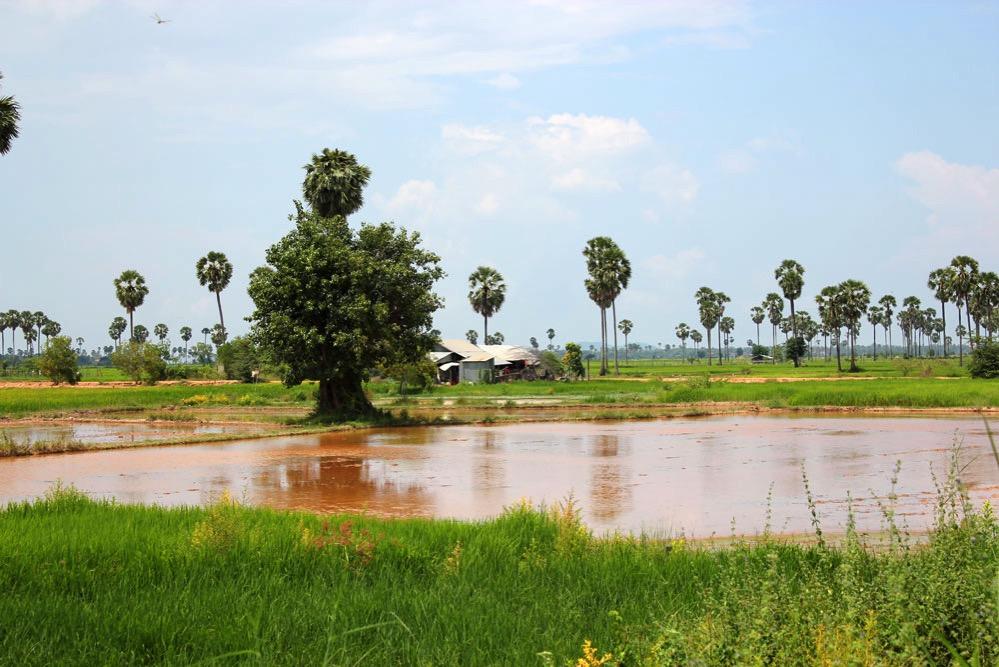 カンボジア雨期の田園風景