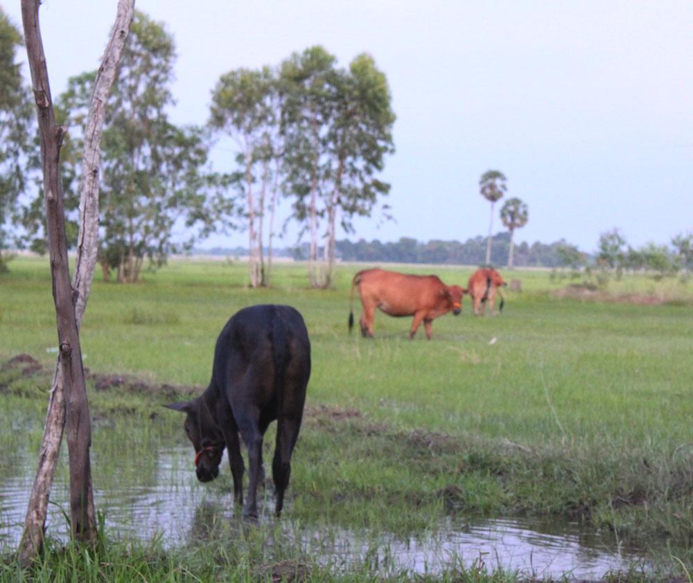 スヴァイリエンの田舎の景色