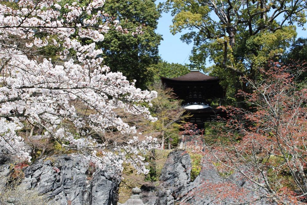 桜と多宝塔