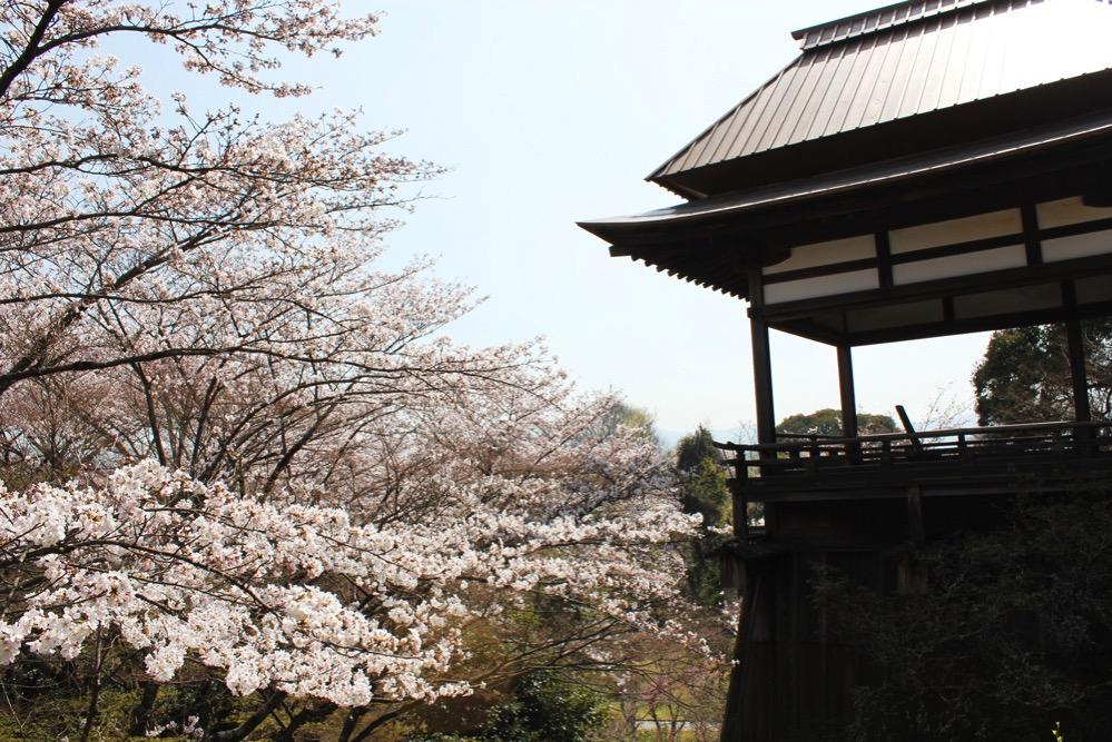 月見亭と満開の桜
