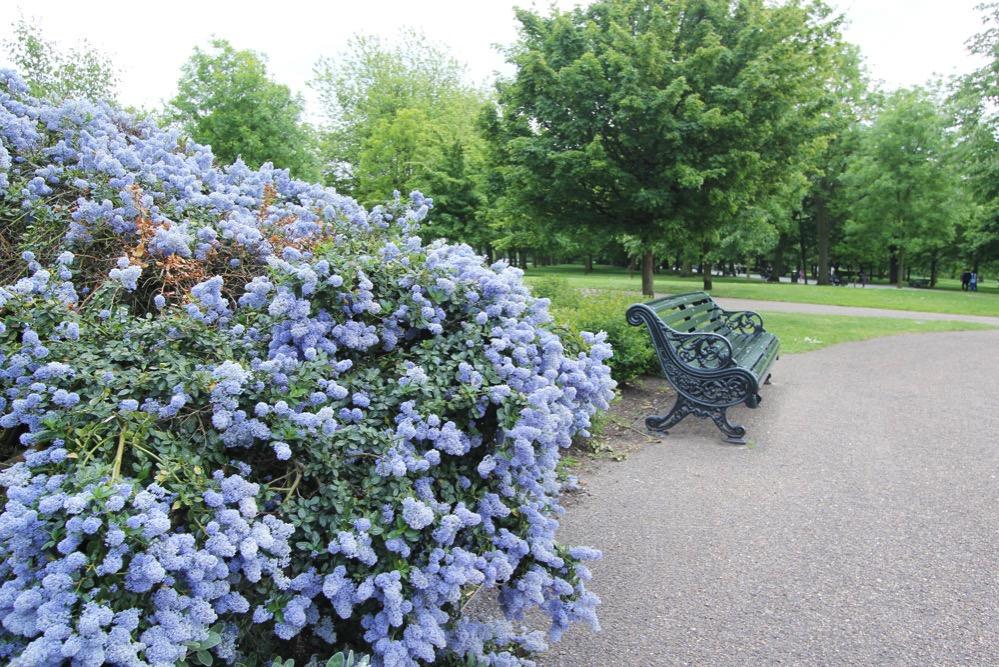 きれいな花が咲き乱れる園内