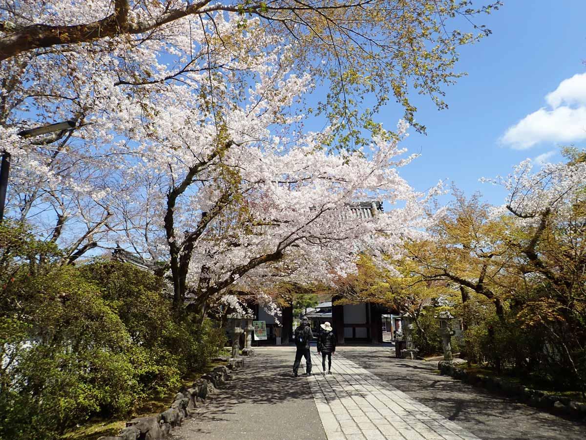 東大門の方へ振り返った時に見える桜