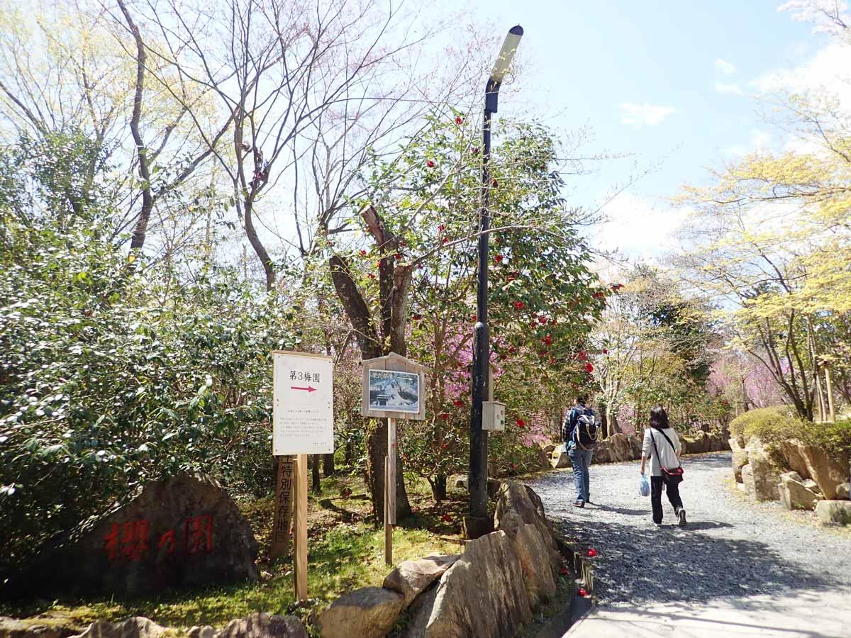 石山寺の梅林