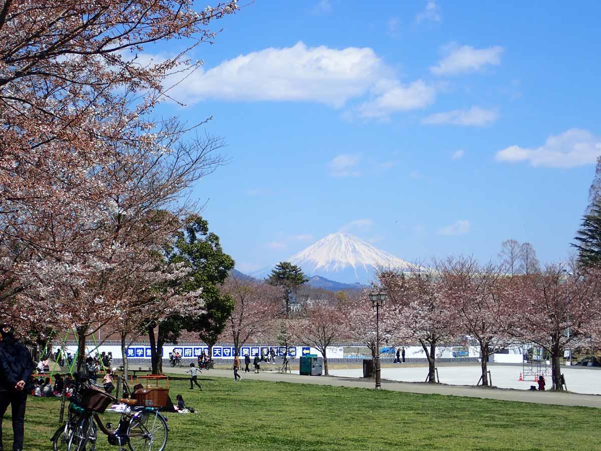 富士見芝生広場から見た富士山