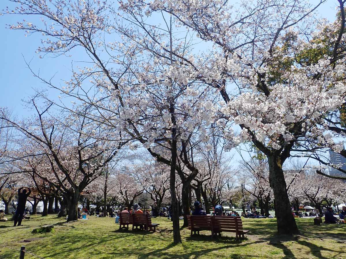 お花見客でいっぱいの駿府城公園