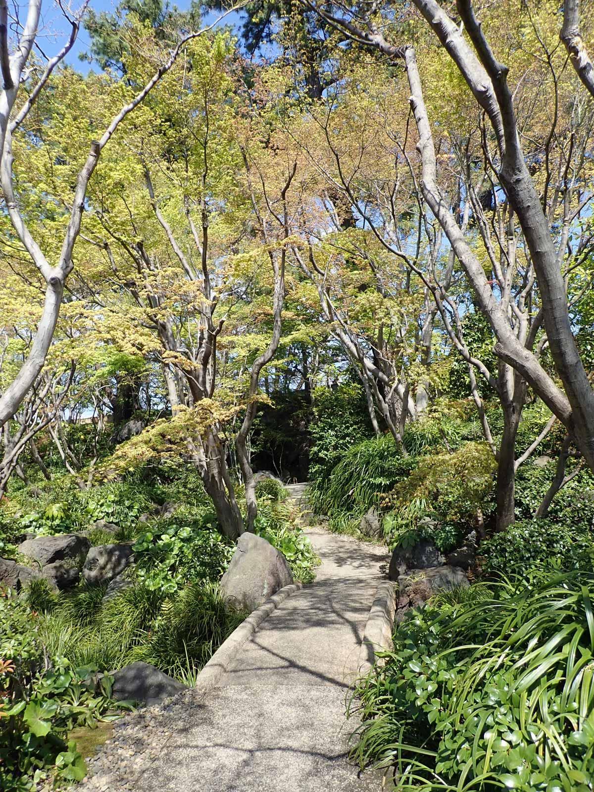 緑の木々が迫ってくるような小道