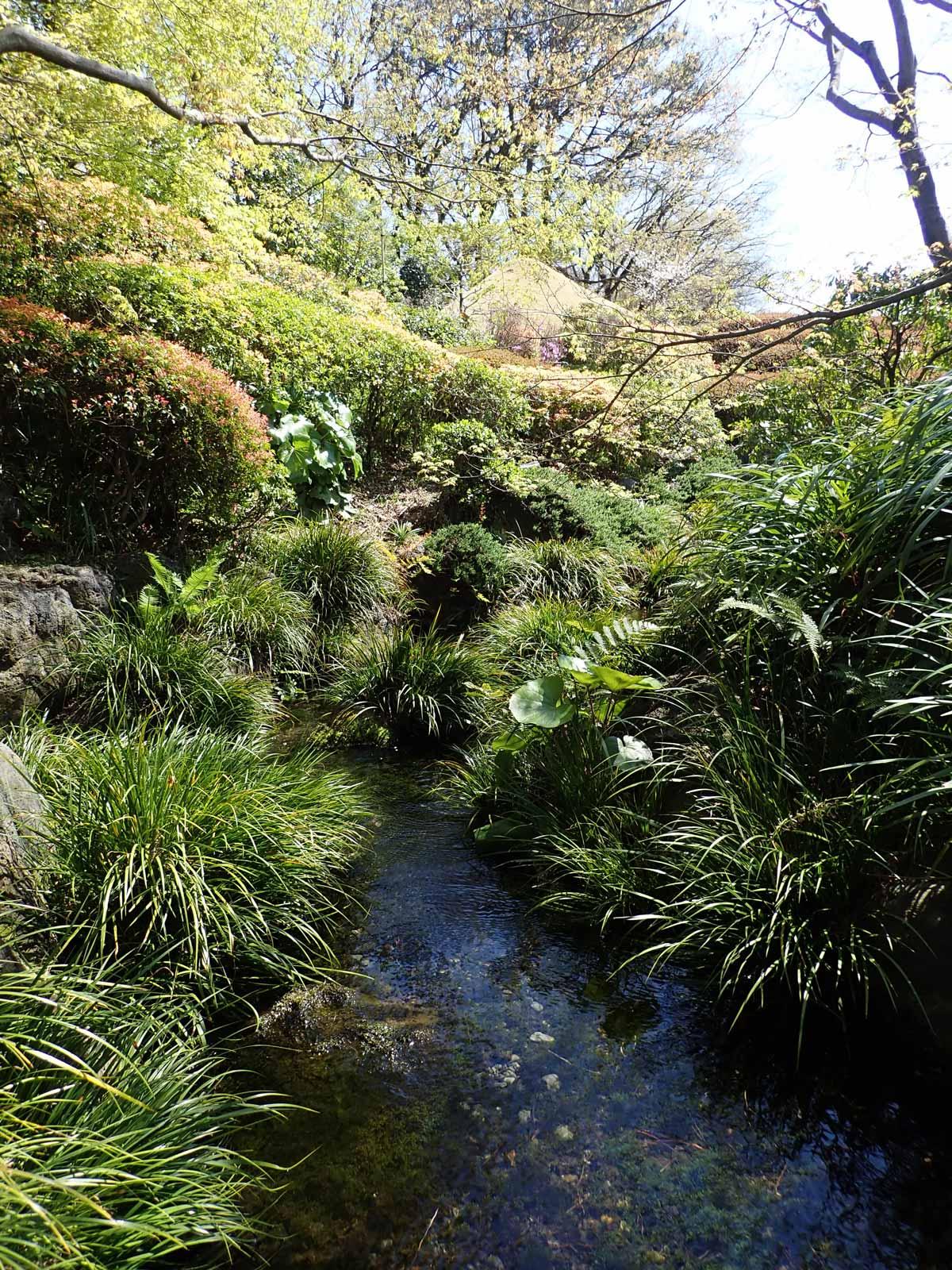 深い緑が印象的な山の庭