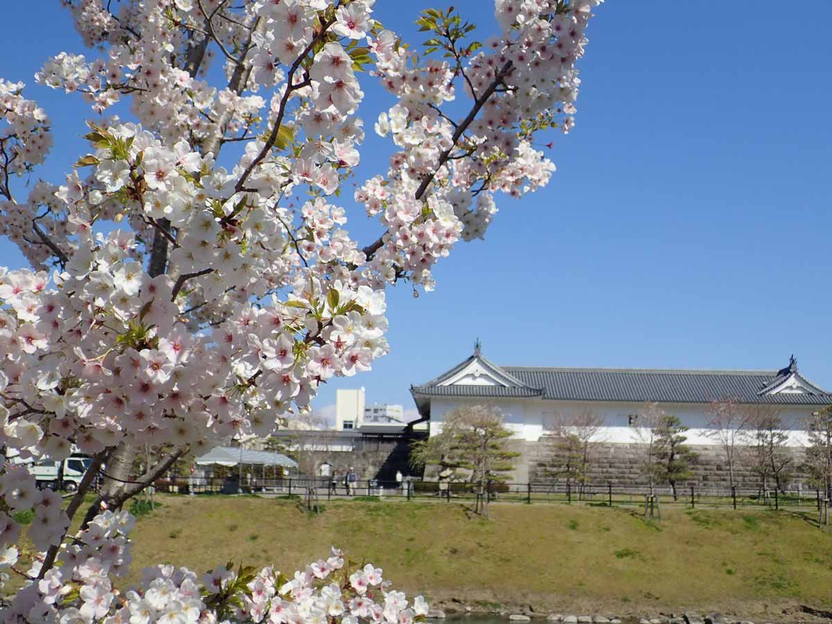東御門と満開の桜