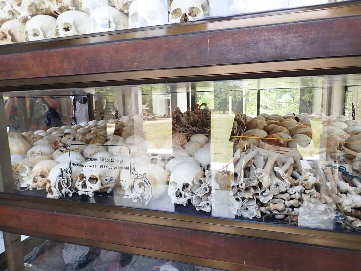 遺骨は科学的に分類されている