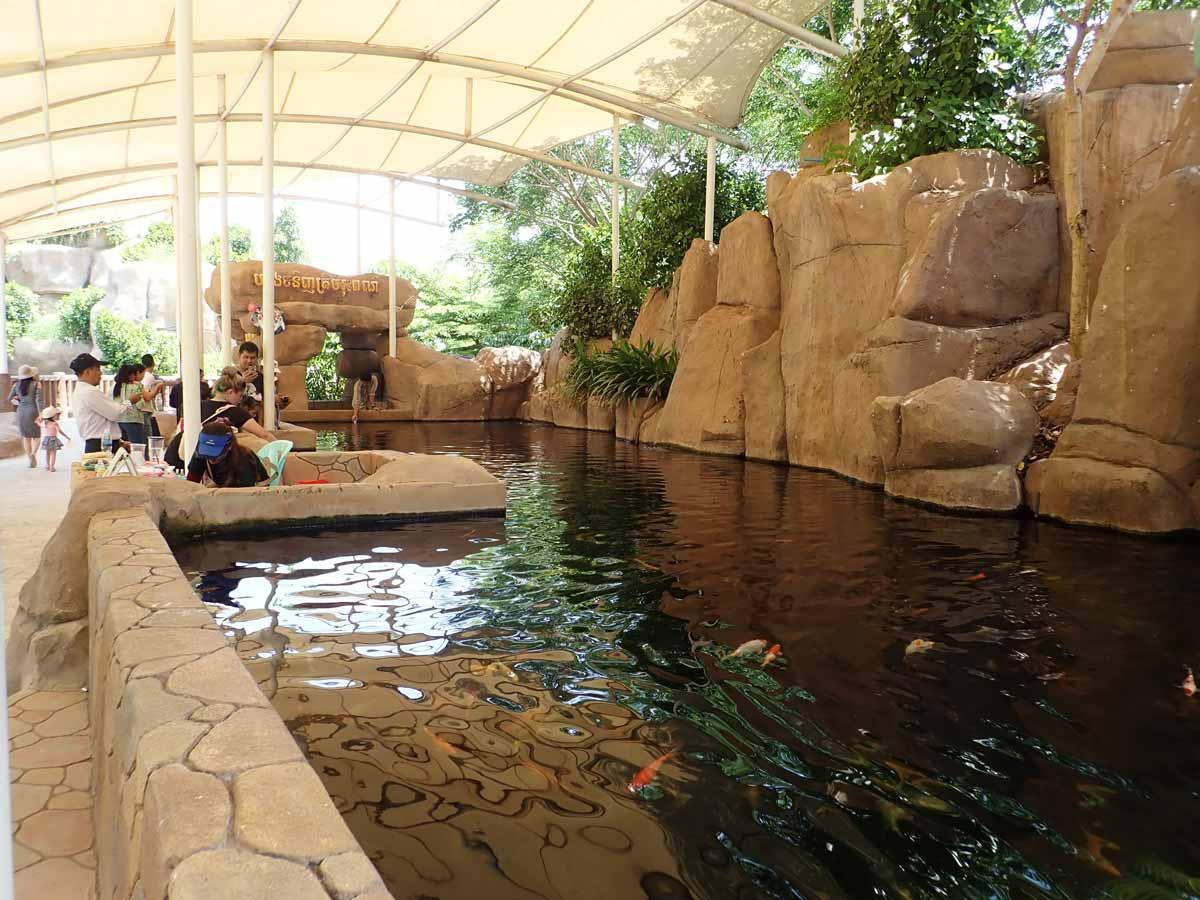 池にはたくさんの鯉が泳いでいる