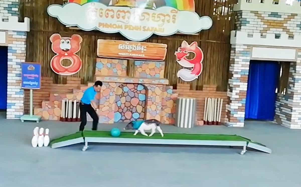 ボーリングをする豚