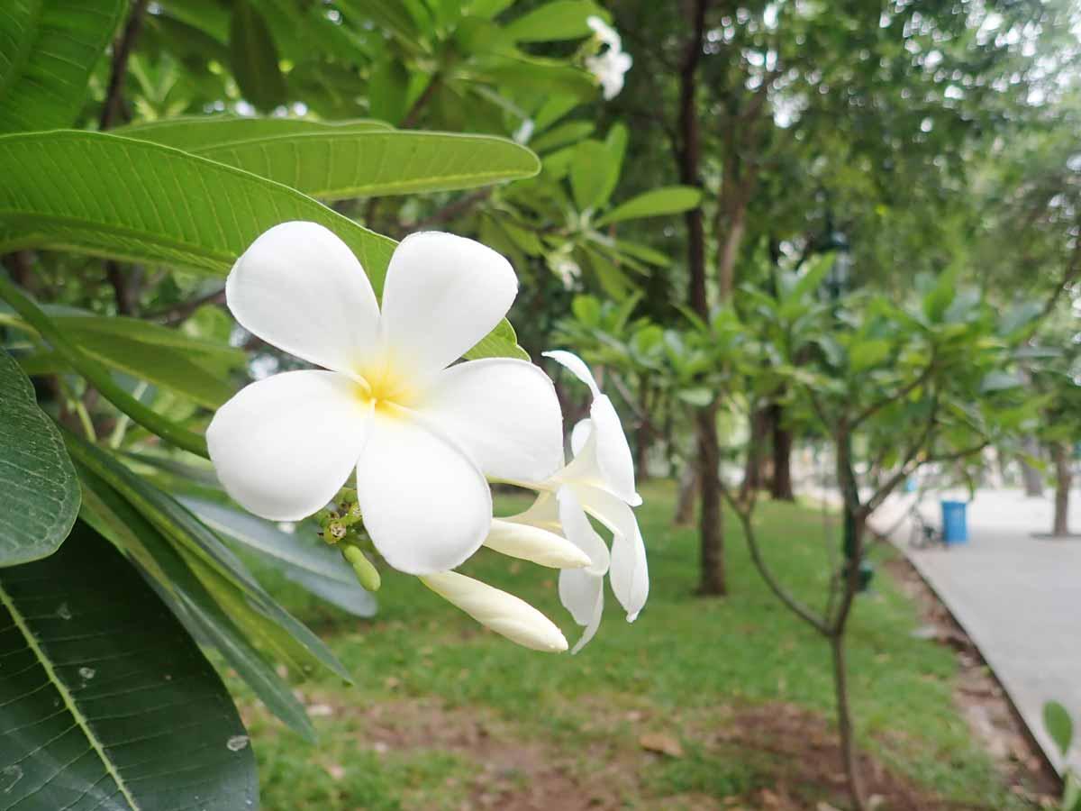 白いきれいな花