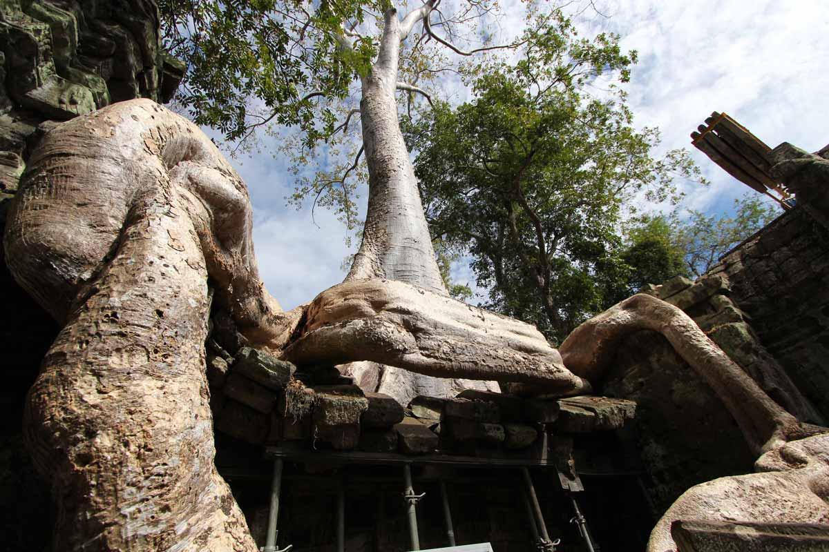 巨木に押しつぶされそうになる遺跡