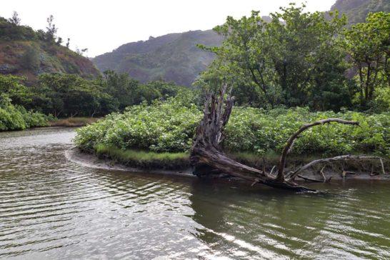 てつ家周辺の森と川