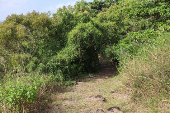 木々の生い茂るブタ海岸への道