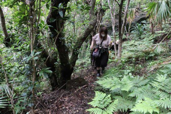 ジャングルの中を歩く