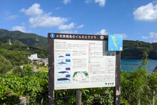 小笠原諸島のイルカとクジラ