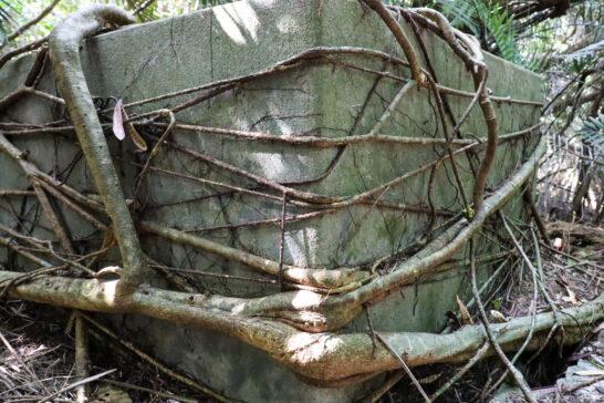 植物に締めつけられる構造物