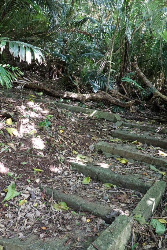 静沢の森遊歩道