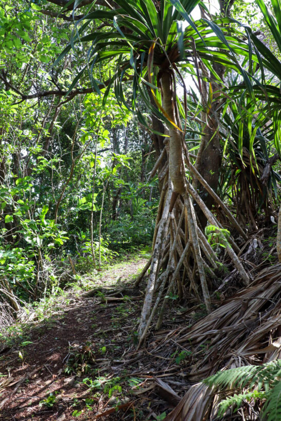 ジャングルの中に作られた道