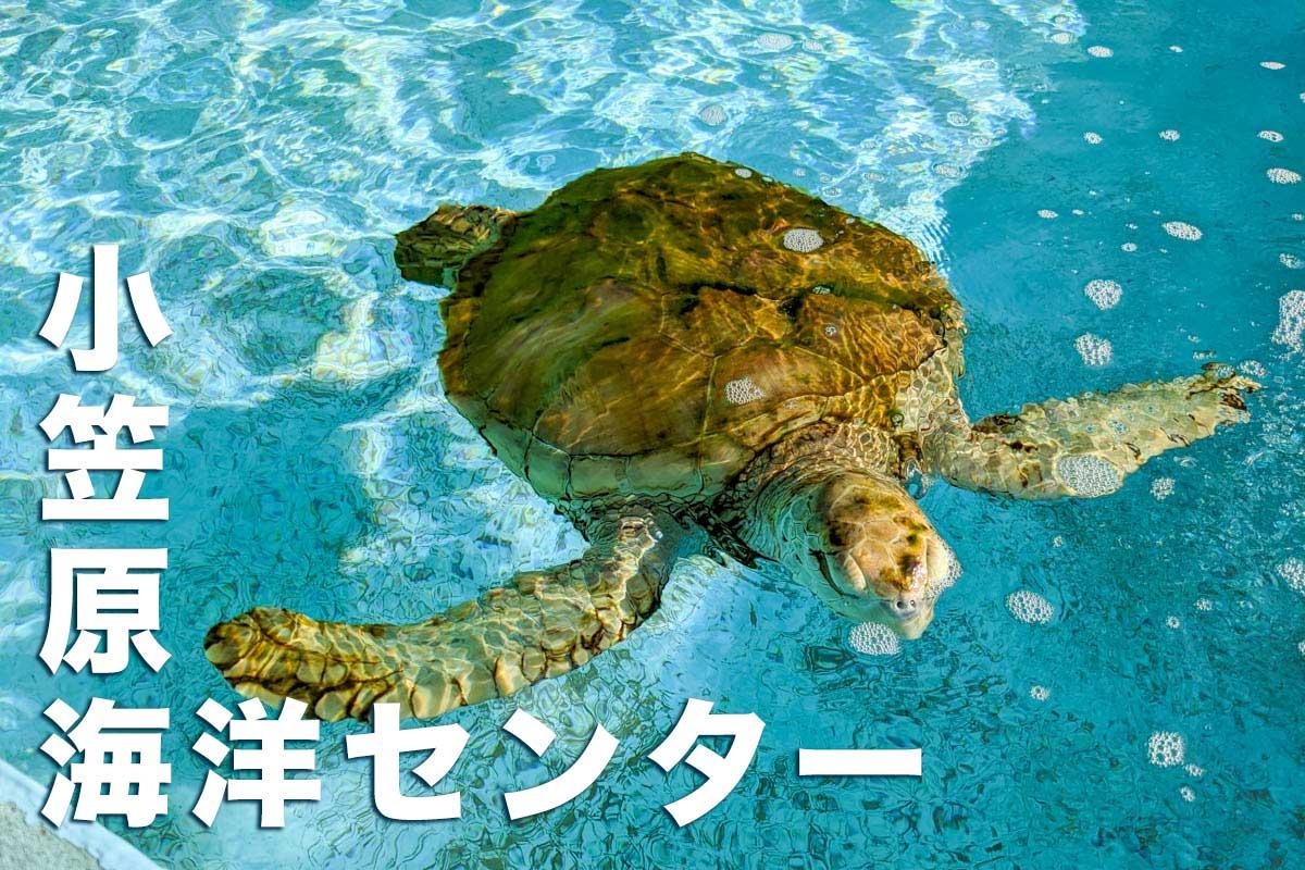 小笠原海洋センター