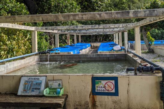 小笠原海洋センターのウミガメ水槽